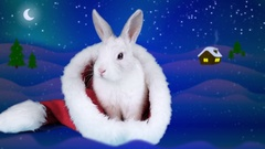 Funny rabbit washing his face and ear in the Santa hat, preparing for Christmas Stock Footage