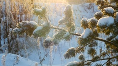 Winter christmas pine tree snow. Merry Christmas and Happy New Year Stock Footage