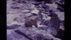 1980: tiger cub sitting on rock formation GRAND TETON WYOMING Stock Footage