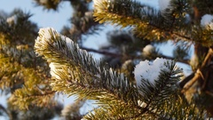 Merry Christmas and Happy New Year. Glass toy on the tree Stock Footage