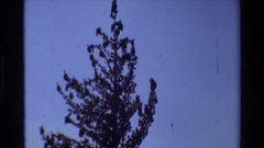 1981: several trees outlined against the sky BRITISH COLUMBIA Stock Footage