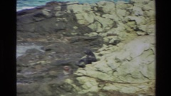 1982: two seals struggle to climb up a rocky slope NEW ZEALAND Stock Footage