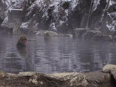 Jigokudani Snow Monkey Park, Kanbayashi Onsen Stock Footage