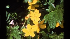 1980: a tropical flower viewed from above, spiky green leaves surrounding six Stock Footage