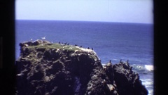 1980: a flock of birds perched on a cliff along the coast BIG SUR CALIFORNIA Stock Footage