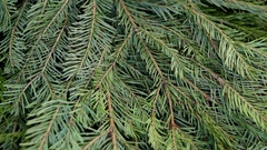 Fir-tree branch Christmas ball Stock Footage