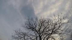 Walnut tree in the evening Stock Footage