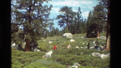 1981: people hiking BRITISH COLUMBIA Stock Footage