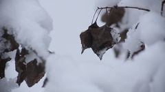 Beautiful branch with early winter under the snow Stock Footage