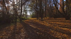 Autumnal Pathway Through The Forest Stock Footage