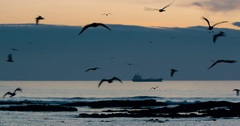 Frantic seaguls on sunset Stock Footage