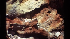 1981: rock with petrified wood in it and someone admiring it BRITISH COLUMBIA Stock Footage