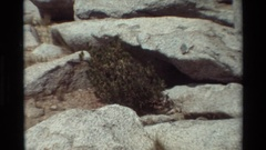 1981: scrub brush growing between grey boulders adds color to a slope BRITISH Stock Footage