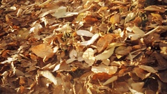 Vintage look colorful autumn leaves in Slow Motion Stock Footage