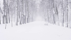 Strong snowfall on alley in town with wind blurred background Stock Footage