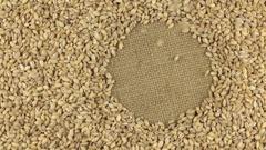 Falling pearl barley grains on the rotating circle of pearl barley Stock Footage