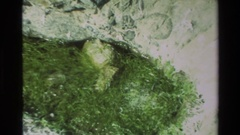 1982: seaweed floats in trapped ocean water on beach and sand dunes sit on rough Stock Footage