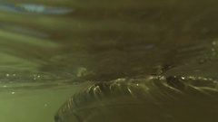 Underwater trout flyfishing Stock Footage
