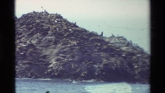 1982: sea lions gathered on a rock outcrop surrounded by ocean CARMEL CALIFORNIA Stock Footage