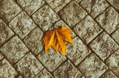 Autumn leaf on the floor Stock Photos