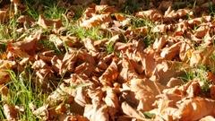 Beautiful autumn foliage natural seasonal background Stock Footage