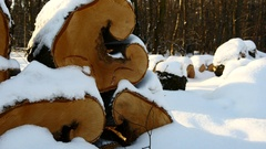 Snowy Firewoods In Winter Forest Stock Footage