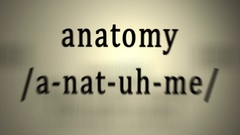 Definition: Anatomy Stock Footage