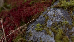 Plants, lichen, moss gows in Arctic - global warming, permafrost melt Stock Footage