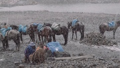 Muleteers on mountain basecamp Stock Footage