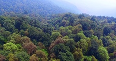 Flying above forests of Shivapuri Nagarjun National Park of Nepal Stock Footage