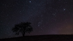 Time lapse of stars sky with milky way moving over old tree silhouette Stock Footage