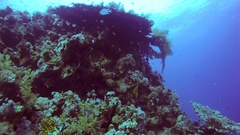 The life of coral reef, Red sea, Sharm El Sheikh, Sinai Peninsula, Egypt Stock Footage
