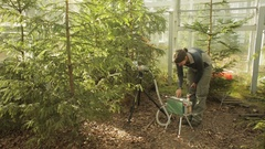 Scientist research on photosynthesis in conifers, spruce, scientific, science Stock Footage