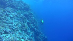 Scuba diver swims near coral reef, accompanied by school of fish Bicolor Stock Footage