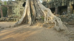 Ta Prohm temple in Angkor Wat, Cambodia Stock Footage