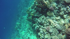 Many fish swim among corals in Red Sea, Egypt Stock Footage