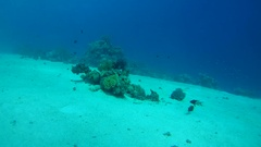 Life on a small coral reef on the sandy bottom, Red sea, Sinai Peninsula, Egypt Stock Footage