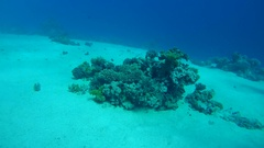 A small coral reef on the sandy bottom, Red sea, Sinai Peninsula, Egypt Stock Footage
