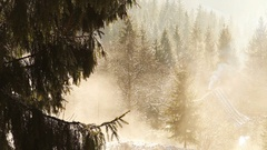 Spring morning in the mountains: melting snow drips down from trees' branches Stock Footage