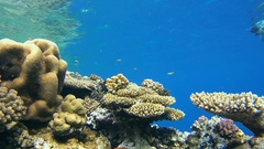 Snorkeling - man swims up to a coral reef and is looking at a variety of Stock Footage
