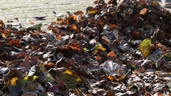 Gardener Blows The Autumn Leaves. Stock Footage