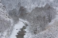 Russia, the Caucasus Mountains, Kabardino-Balkaria. Hoarfrost on birch tree.. Stock Photos