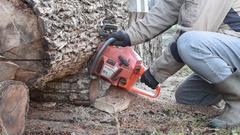 Man With Chainsaw Cutting Walnut Log. Stock Footage