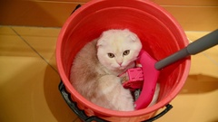 The kitten lies in bucket with a mop Stock Footage
