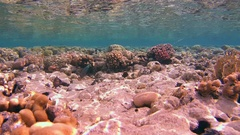 Oung parrotfish feed on the beautiful shallow coral reef is reflected from the Stock Footage