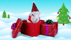 Fluffy white rabbit in the costume of Santa Claus in present box Stock Footage