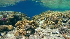 Beautiful shallow coral reef,  Red sea, Sharm El Sheikh, Sinai Peninsula, Egypt Stock Footage