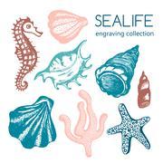 Sea collection with seashells, starfish, coral, seahorse. Hand drawn seashe.. Stock Illustration