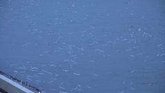 4K Aerial view seagull flock bird fly over river water at twilight s Stock Footage