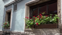 4K Traditional house architecture in Koln old town red flower window decoration Stock Footage